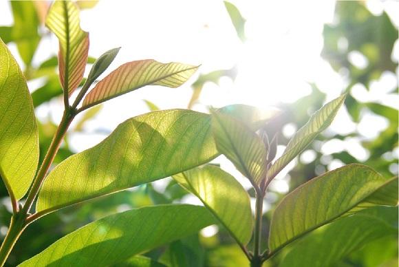 ペニス増大効果を持つ天然成分が黄金比率で入っている
